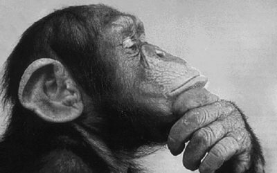Dar valor a la inteligencia animal.