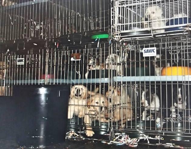 cachorros condenados
