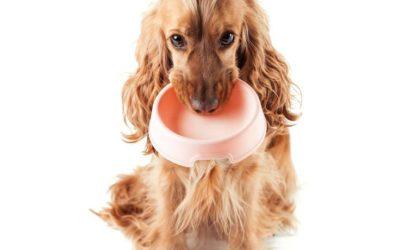¿Influye la alimentación en el comportamiento animal?