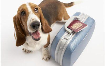 Viajar con tu mascota.