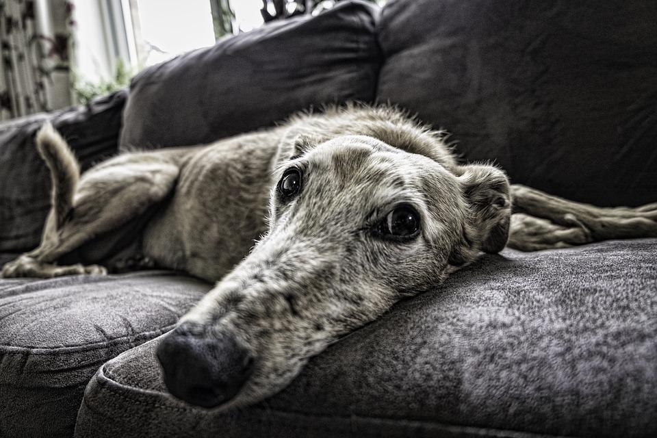 casa acogida sofa