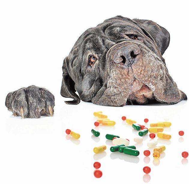 """""""Automedicar"""" a tu perro"""