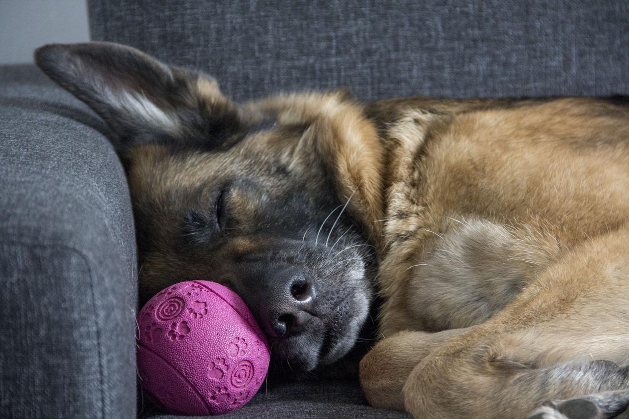 sofa y antropomorfizar a tu perro