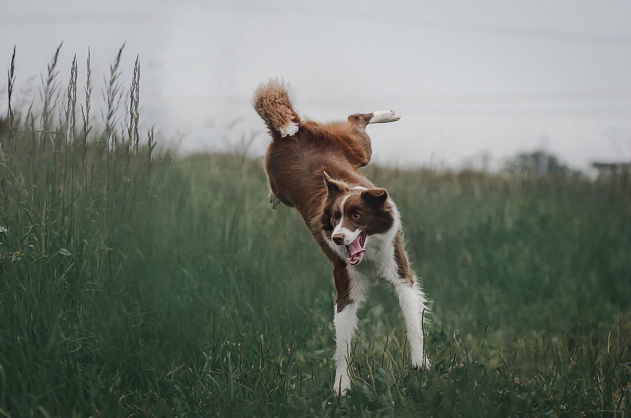 Perro en naturaleza